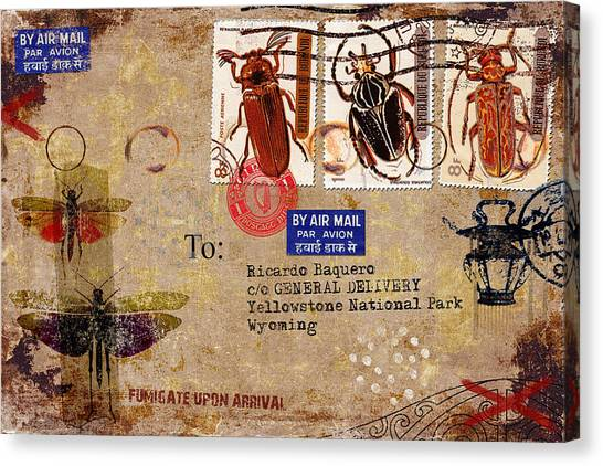 Grasshopper Canvas Print - Fumigate Upon Arrival by Carol Leigh
