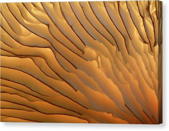 Fungus Gills Abstract Canvas Print by Nigel Downer/science Photo Library