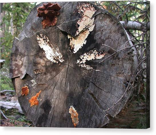 Fungus Painting Canvas Print