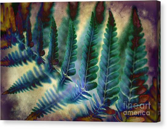 Funky Fern. Canvas Print