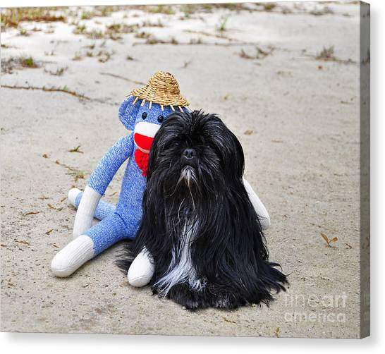 Funky Monkey And Sweet Shih Tzu Canvas Print