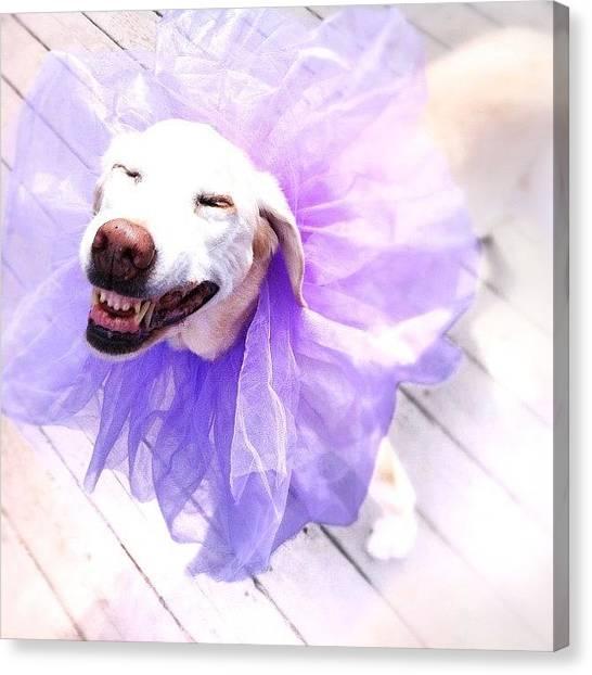 Labrador Retrievers Canvas Print - Funny Dog by Susan Schoultz