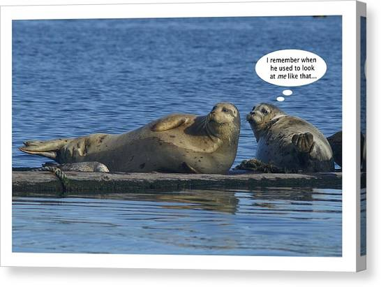 Funny Seals Canvas Print