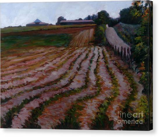 Furrowed Field Canvas Print