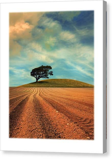Oak Trees Canvas Print - Furrows by Mal Bray