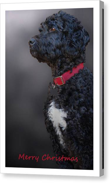 Furry Christmas Canvas Print by Cindy Rubin
