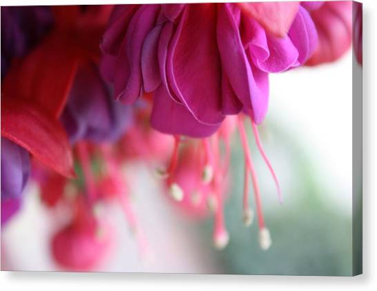 Fuschia Canvas Print by Maria Schaefers