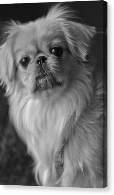 Canvas Print featuring the photograph Fuzzface by Kristi Swift