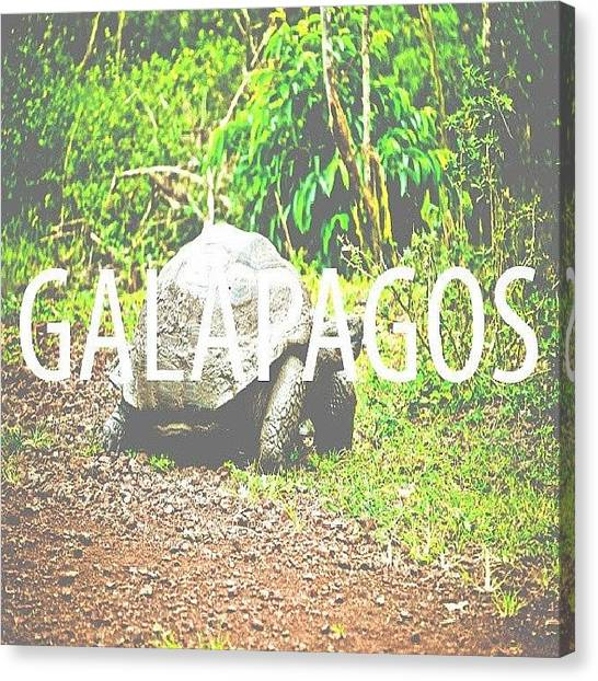 Tortoises Canvas Print - #galapagos #wildlife #nature #wwf by M H