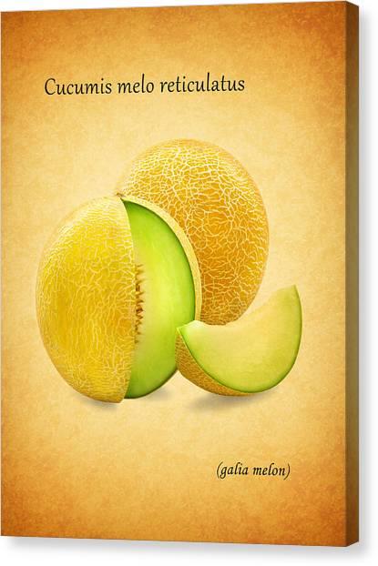 Watermelons Canvas Print - Galia Melon by Mark Rogan