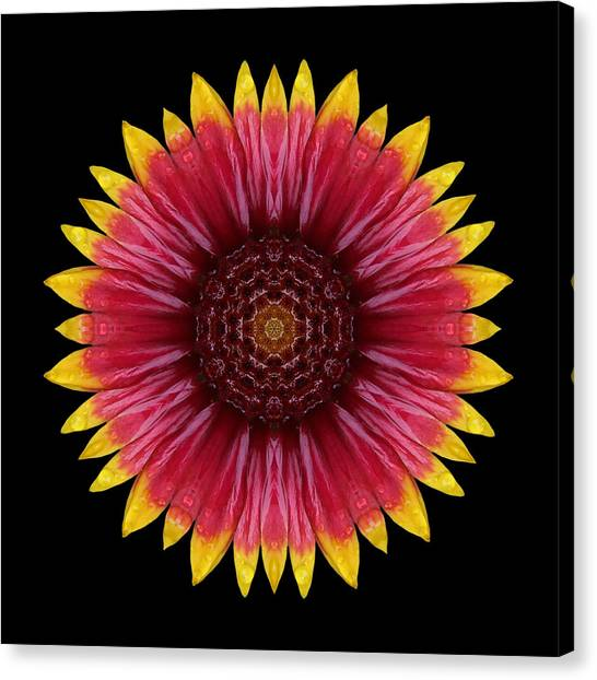 Galliardia Arizona Sun Flower Mandala Canvas Print