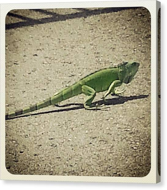 Iguanas Canvas Print - #gallinadepalo #iguana #ugly But #cute by Rose Rosello