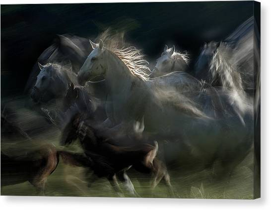 Horses Galloping Canvas Print - Gallop by Milan Malovrh