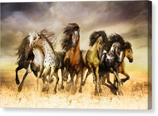 Black Stallion Canvas Print - Galloping Horses Full Color by Shanina Conway