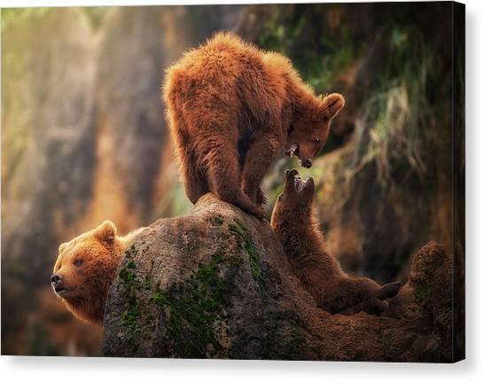 Brown Bears Canvas Print - Games On The Heights by Sergio Saavedra Ruiz