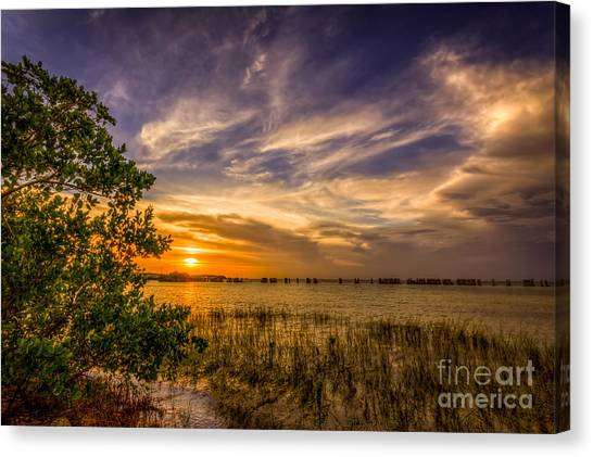Seagrass Canvas Print - Gandy Lagoon by Marvin Spates