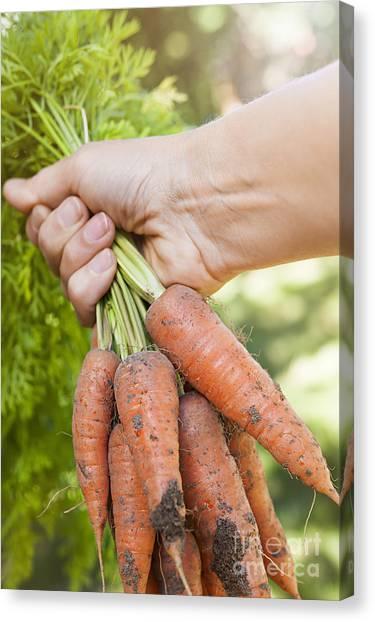 Carrots Canvas Print - Garden Carrots by Elena Elisseeva