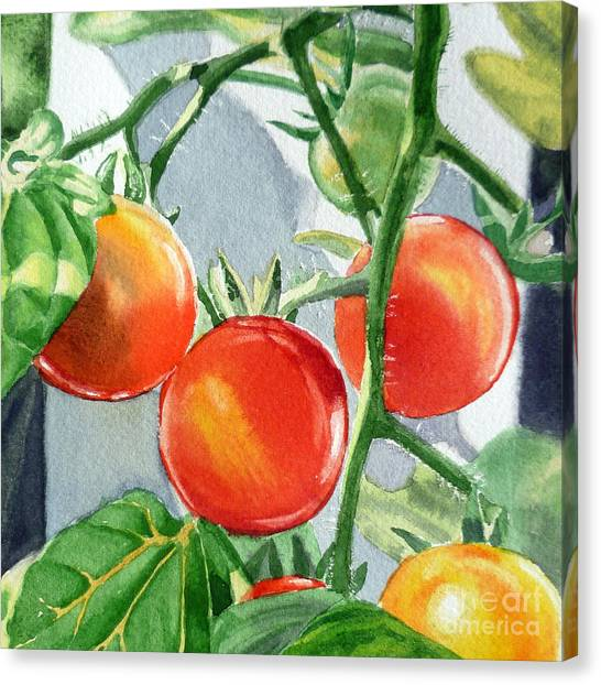 Ketchup Canvas Print - Garden Cherry Tomatoes  by Irina Sztukowski