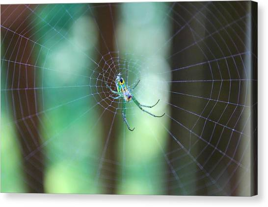Canvas Print featuring the photograph Garden Spider by Candice Trimble