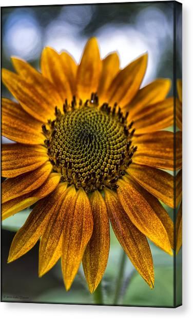 Garden Sunflower Canvas Print