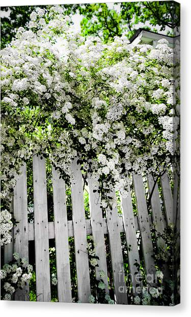 Architectural Detail Canvas Print - Garden With White Fence by Elena Elisseeva
