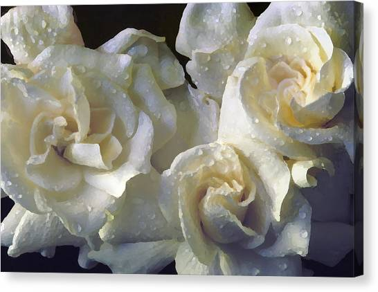 Gardenia I Canvas Print