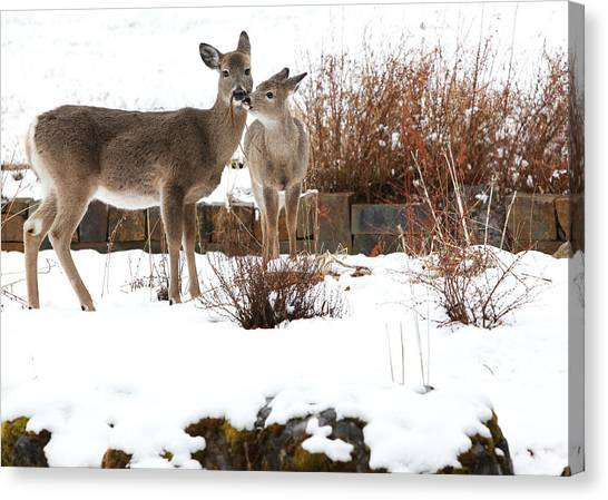 Deer Canvas Print - Gardening by Aaron Aldrich