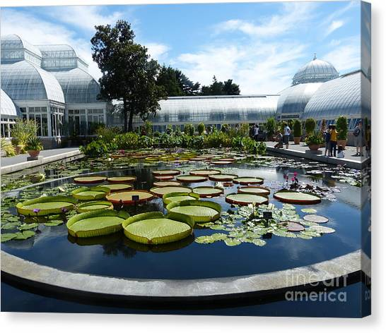 Pond Of Lilies Canvas Print