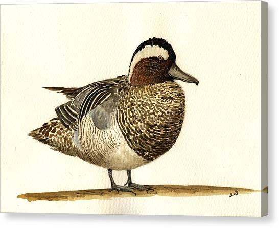 Ducks Canvas Print - Garganey Duck by Juan  Bosco