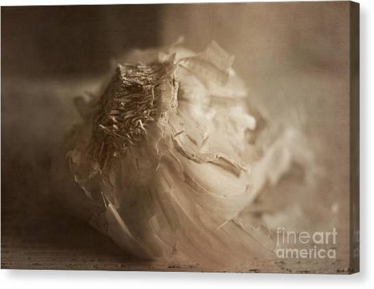 Condiments Canvas Print - Garlic 1 by Elena Nosyreva