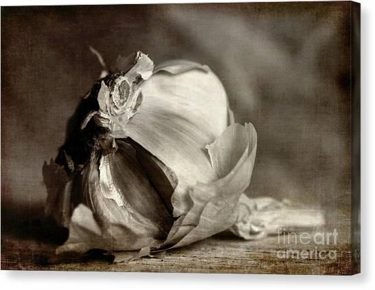 Condiments Canvas Print - Garlic 3 by Elena Nosyreva