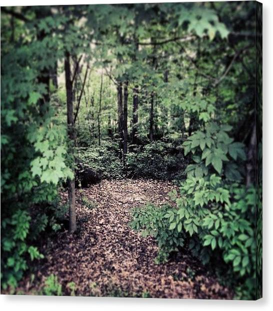 Forest Paths Canvas Print - #gateway To The #unkown. #forest #trees by Chad Schwartzenberger