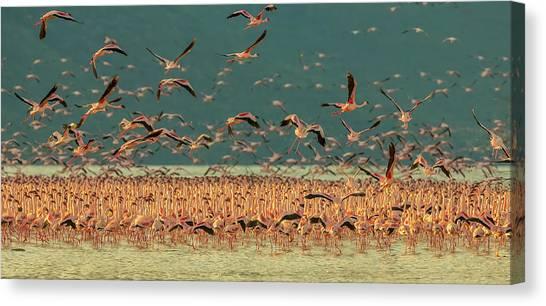 Kenyan Canvas Print - Gathering In Golden Light by David Hua