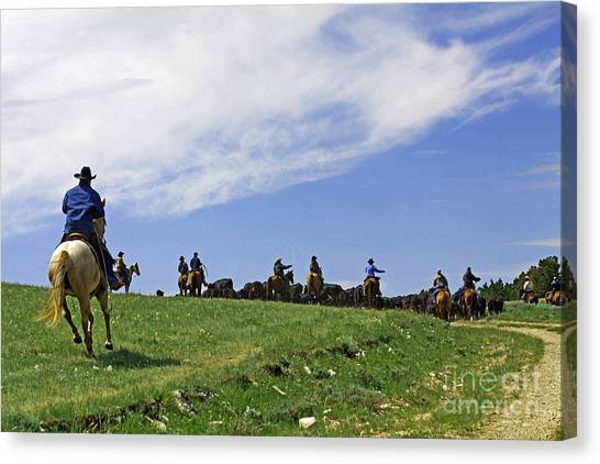 Gathering The Herd. Canvas Print