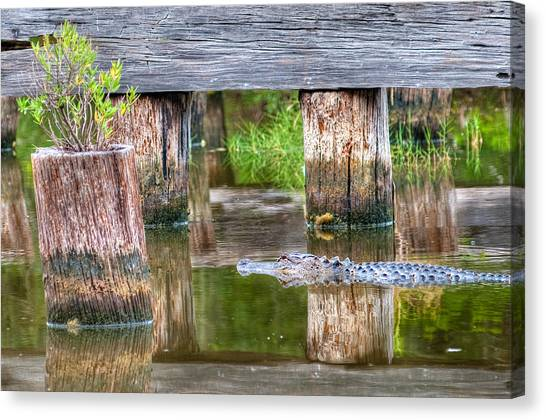 Gator At The Old Trestle Canvas Print