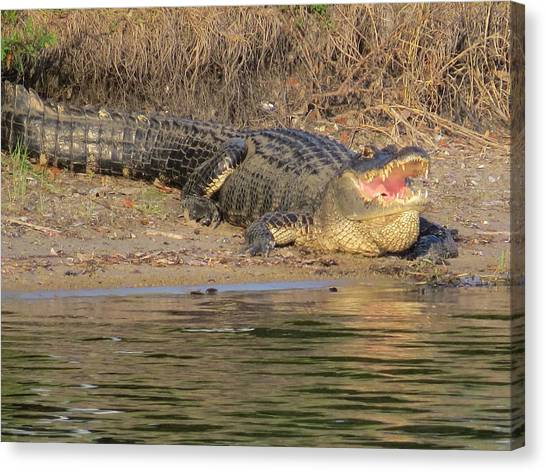 Alligator Canvas Print - Gator With Open Mouth by Zina Stromberg