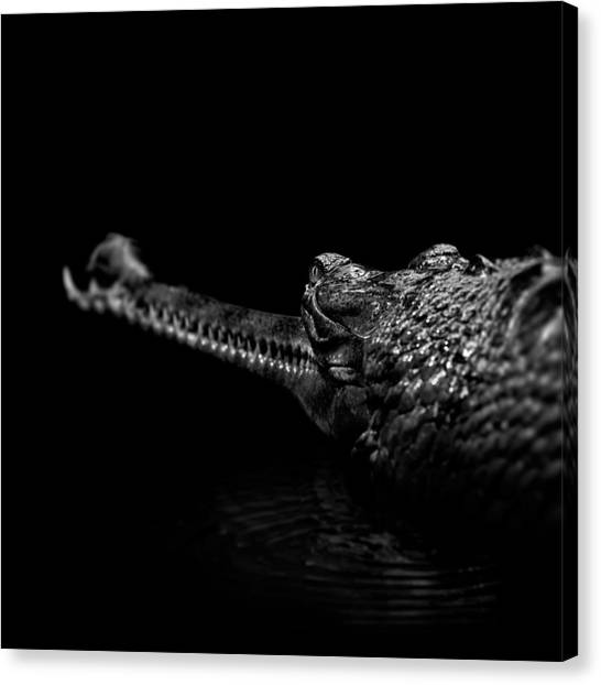 Zoo Canvas Print - Portrait Of Gavial In Black And White by Lukas Holas