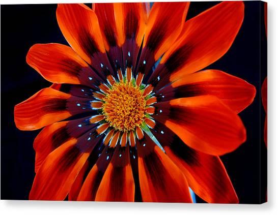 Gazania Flower Canvas Print by Larry Harper