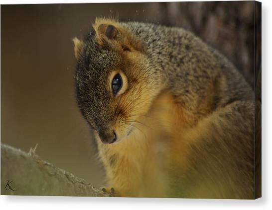 Gazing Squirrel Canvas Print