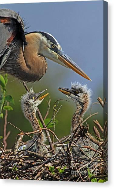 Great Blue Heron Twins Canvas Print
