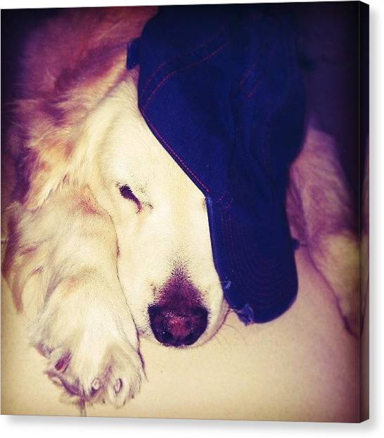 Golden Retrievers Canvas Print - G.d.i.m. Weekend's Over by William Chung