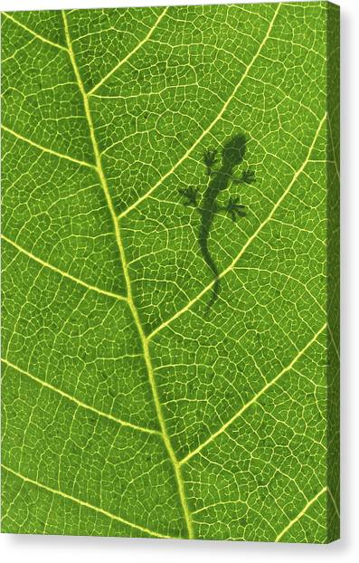 Iguanas Canvas Print - Gecko by Aged Pixel