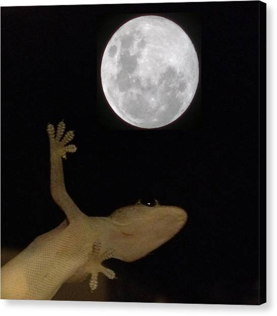 Igdaily Canvas Print - Gecko Moon by Cameron Bentley
