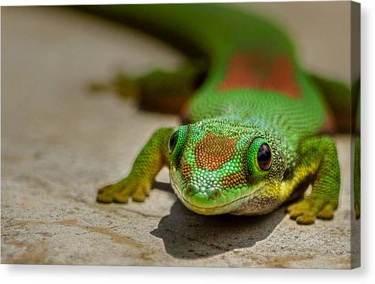 Gecko Portrait Canvas Print