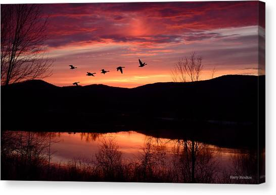 Geese After Sunset Canvas Print