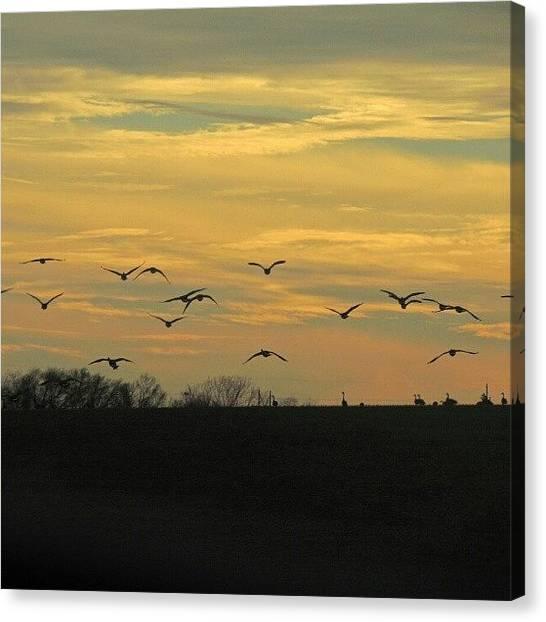 Geese Canvas Print - Geese In Flight by Kelli Stowe