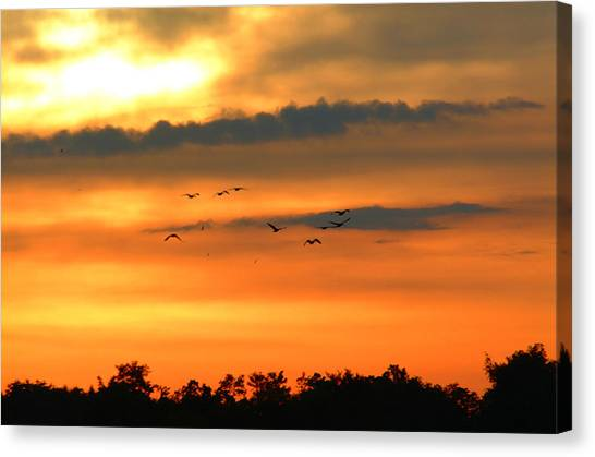 Geese Into The Sunset Canvas Print
