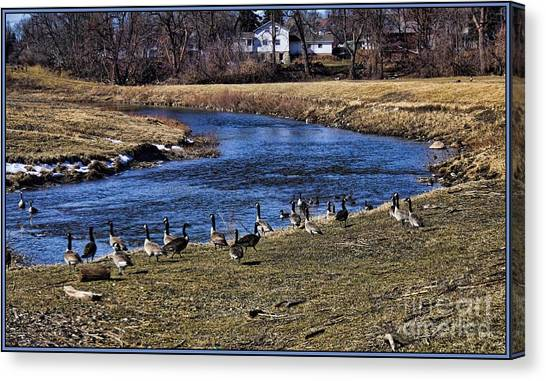 Geese On The Creek Canvas Print