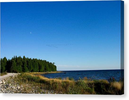 Geese Over Cana Island Canvas Print by Pamela Schreckengost