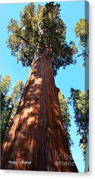 General Sherman Tree, Sequoia National Park, California Canvas Print